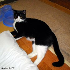 cat20050327_002.jpg