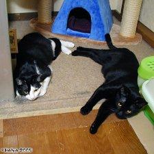 cat20050327_003.jpg