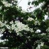 20110625_039.jpg