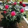 20120526_039.jpg