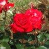 20120526_059.jpg