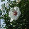 20120716_063.jpg