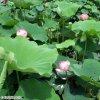 20120716_157.jpg