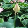 20120716_167.jpg
